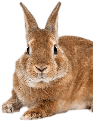 Decorative Rabbit in website footer
